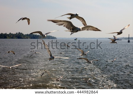 Sea gulls fly along the backwaters of Kerala