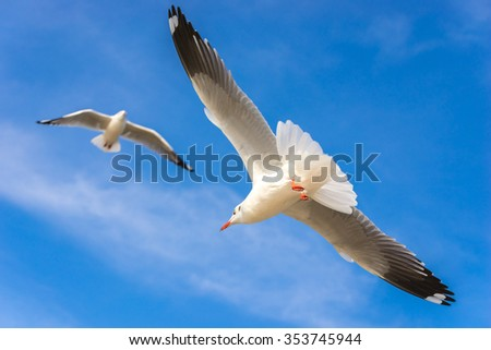 Sea gulls fly on background a blue sky