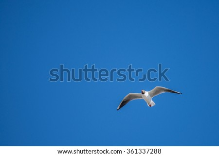 Sea gulls flying in the blue sunny sky over the coast of Baltic Sea - stock photo