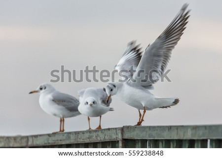 Sea Gulls in Harbor