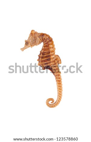 Sea horse over white background