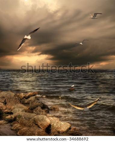 Sea landscape with dramatic sky and seagulls