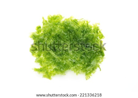 Sea lettuce - stock photo