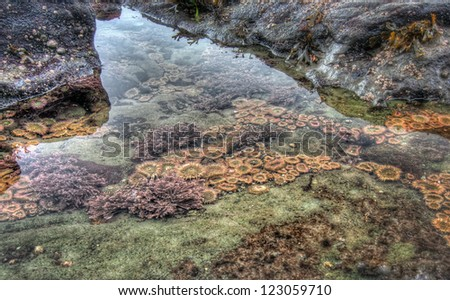 Sea life in a clear tidal pool - stock photo