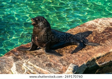 Sea lion bask in the sun next to the water - stock photo