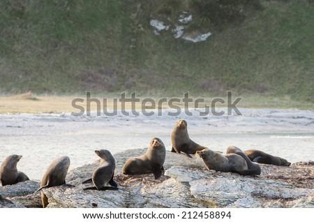 sea lion colony on sharp sea rocks - stock photo