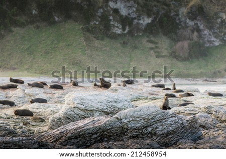 sea lion colony on sharp sea rocks - stock photo