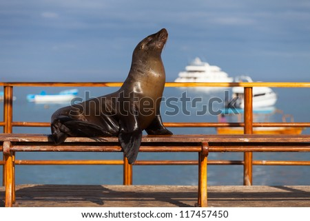 Sea Lion, Galapagos Islands, Ecuador - stock photo