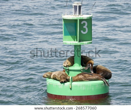 Sea Lion pups and yearlings resting on a green bouy off shore while the adults are fishing near by. - stock photo