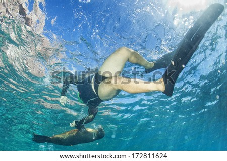 sea lion seal while playing with scuba diver  - stock photo