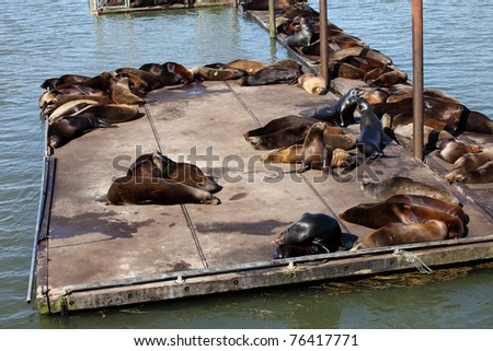 Sea-lions basking at a marina in Astoria Oregon. - stock photo