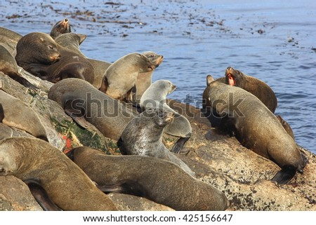 Sea-lions  in the Beagle Channel , Argentina