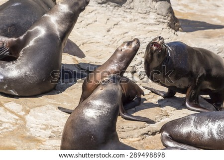 sea lions lying on the rocks