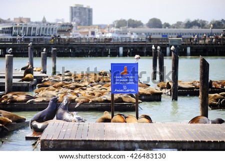 Sea lions on Pier 39 in San Francisco, California, USA - stock photo