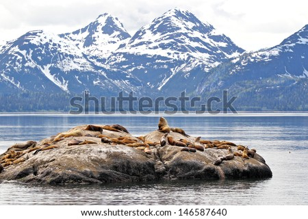 Sea lions on rock with icy mountain background - stock photo