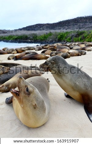 Sea lions on the Galapagos Islands