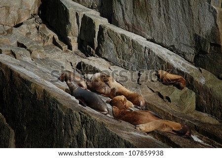 Sea lions on the rock - stock photo