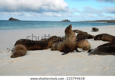 Sea lions resting on the beach - stock photo