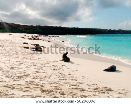Sea Lions Sunning on a White Sand Beach in the Galapagos Islands - stock photo