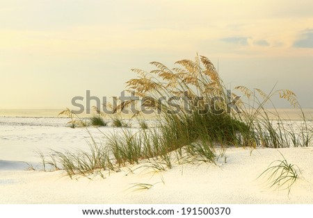 Sea Oats on White Sand Florida Beach as the Sun Rises - stock photo
