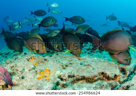 Sea of cortez reef fishes. - stock photo