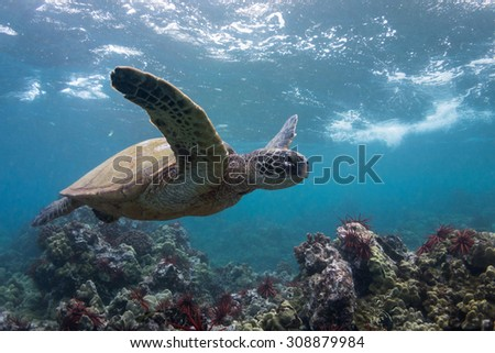 Sea of Spines - stock photo