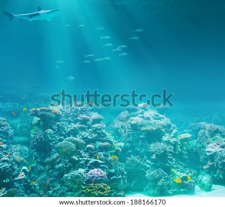 Sea or ocean underwater coral reef with shark - stock photo