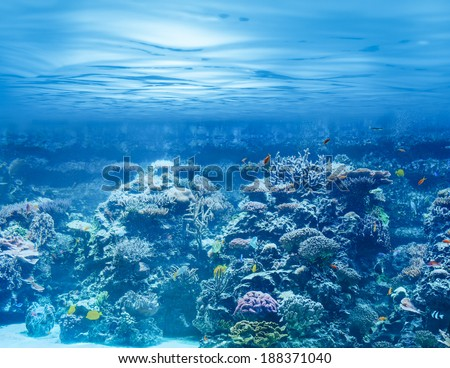 Sea or ocean underwater with coral reef and tropical fishes - stock photo
