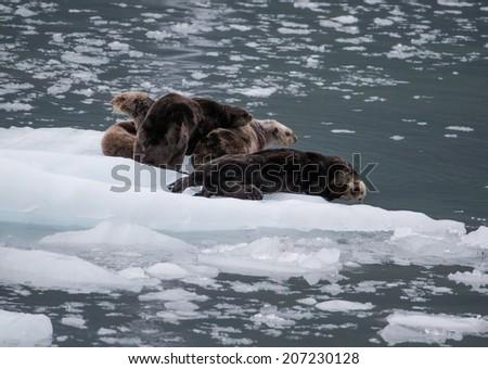 Sea Otters - stock photo