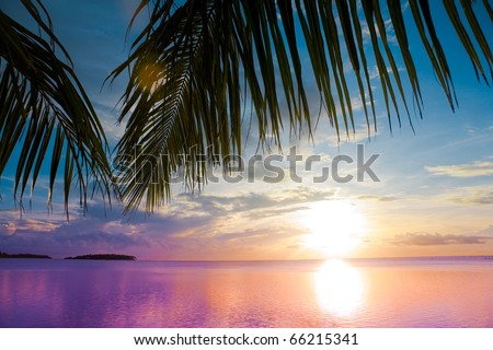 Sea Palm Beach - stock photo