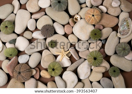 Sea pebble and a sea star as a background