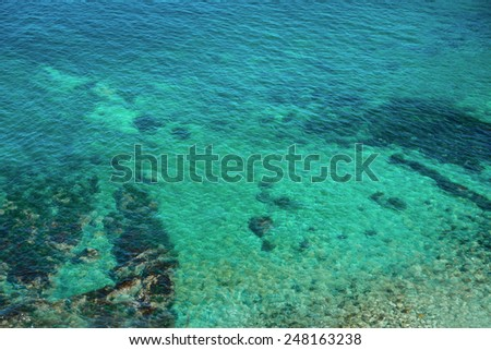 Sea plant in blue transparent water, nature background - stock photo