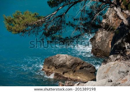 Sea rocks and a tree - stock photo
