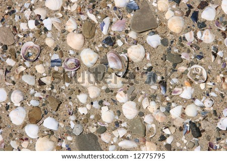 Sea sand and shells on the beach