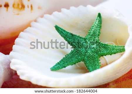 Sea shell and star - stock photo