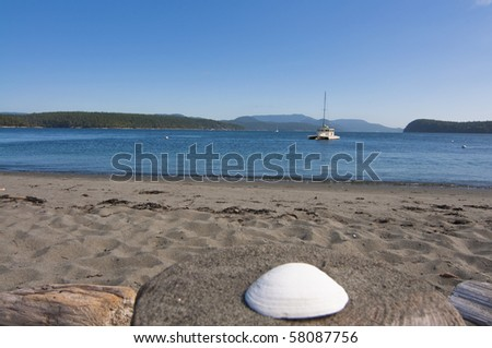 Sea shell at a beach in Puget Sound Washington on a beautiful sunny day. - stock photo