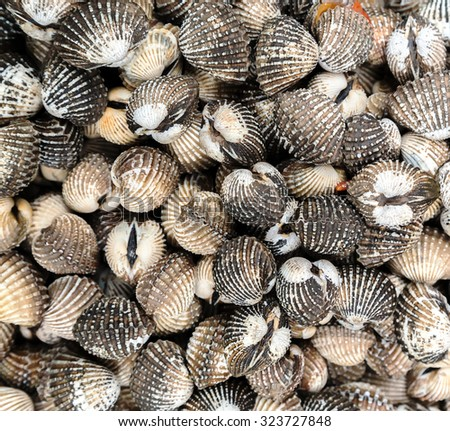 Sea Shell Background or Texture at street market. Seafood, background Sea food - stock photo