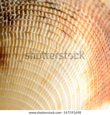 sea shell close-up - stock photo