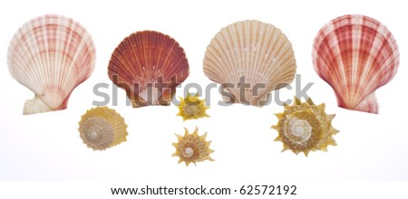 Sea Shell Collection Isolated on White with a Clipping Path. - stock photo