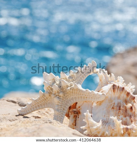 sea shell crab on the beach for background with bokeh on ripple in morning - stock photo
