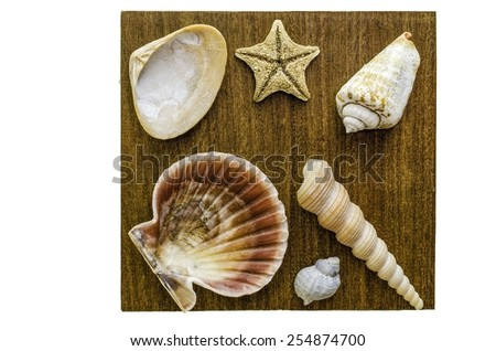 Sea shell decoration with a wooden texture in background - stock photo