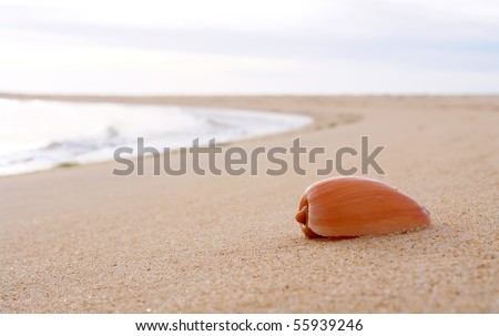 Sea shell detail in beach sand background - stock photo