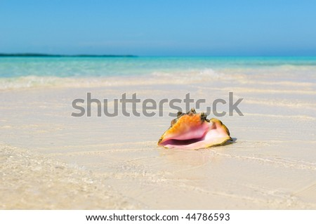 Sea shell in the beach