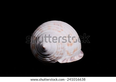 Sea Shell Isolated On A Black background - stock photo