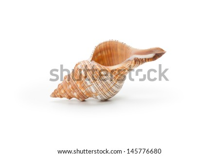 Sea shell, isolated on white background - stock photo