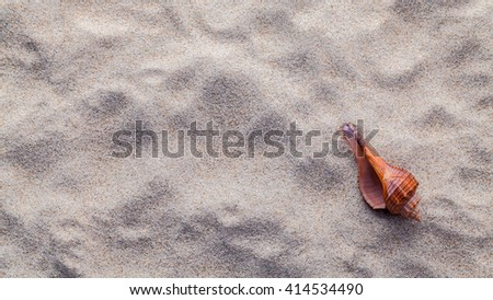Sea shell on beach sand for summer and beach concept. Studio shot beach background. - stock photo