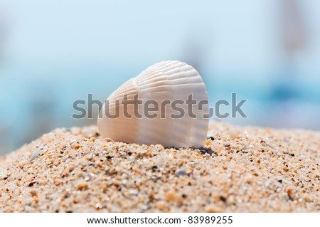 Sea shell on sand close up. Vacation memories concept. - stock photo