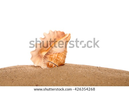 Sea shell on sand in studio - stock photo