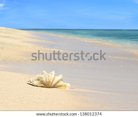 Sea shell on sandy beach with blue sky and ocean in the background - stock photo