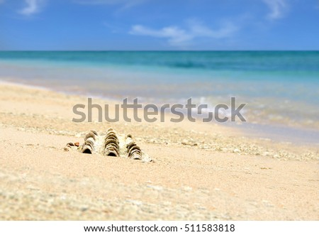 Sea shell on sandy beach with blue sky and ocean in the background